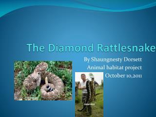 The Diamond Rattlesnake