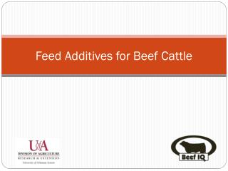 Feed Additives for Beef Cattle