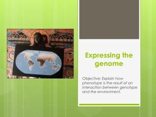 Expressing the genome