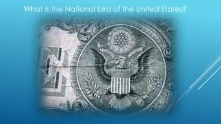 What is the National bird of the  United  States?