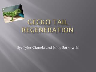 Gecko Tail  Regeneration