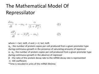 The Mathematical Model Of  Repressilator