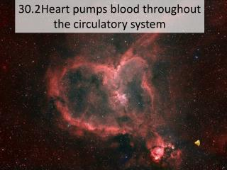 30.2	Heart pumps blood throughout the circulatory system