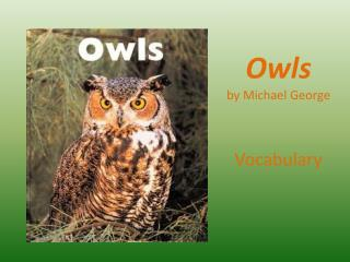 Owls  by Michael George
