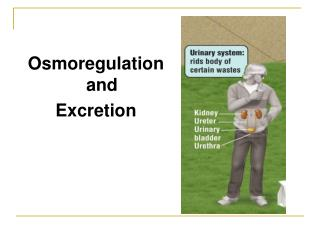 Osmoregulationand  Excretion