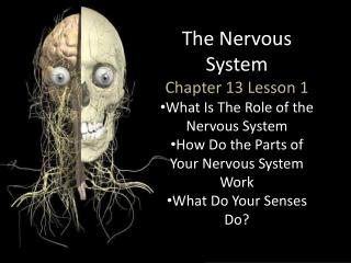 The Nervous System Chapter 13 Lesson 1 What Is The Role of the Nervous System