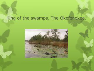 King of the swamps. The Okefenokee.