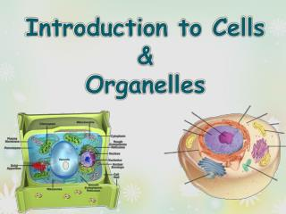 Introduction to Cells  &  Organelles