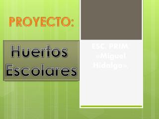 ESC. PRIM. «Miguel Hidalgo»,
