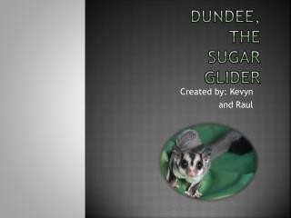 Dundee, the sugar glider