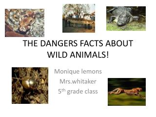 THE DANGERS FACTS ABOUT WILD ANIMALS!