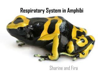 Respiratory System in Amphibi
