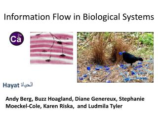 Information Flow in Biological Systems