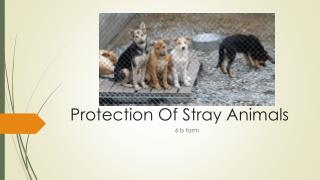 Protection Of Stray Animals