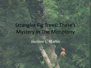 Strangler Fig Trees: There's Mystery In The Monotony