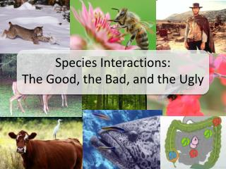 Species Interactions: The Good, the Bad, and the Ugly