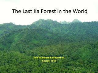 The Last Ka Forest in the World