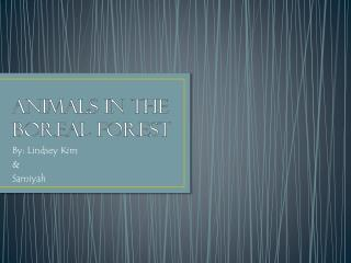 Animals in the Boreal Forest