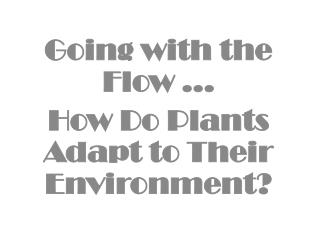 Going with the Flow … How Do Plants Adapt to Their Environment?