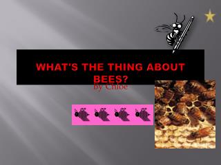 What's the thing about Bees?