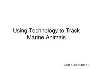 Using Technology to Track Marine Animals