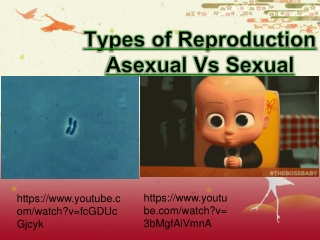 Types of Reproduction Asexual Vs Sexual