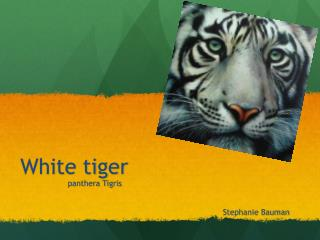 white tigers are an endangered species and facing many challenges The developers obtained a permit to harm endangered species by developing of rare and endangered plants and animals facing the loss key west the newspaper.