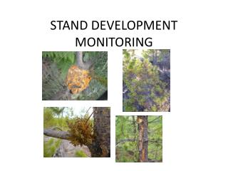 STAND DEVELOPMENT MONITORING