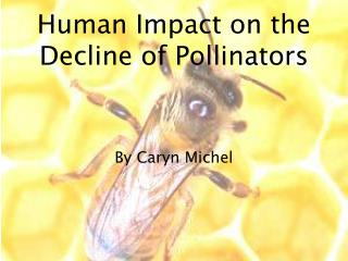 Human Impact on the Decline of Pollinators