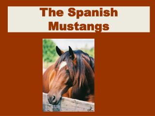 The Spanish Mustangs