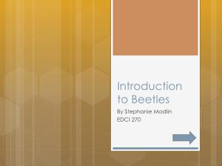 Introduction to Beetles