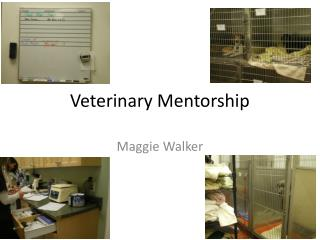 Veterinary Mentorship