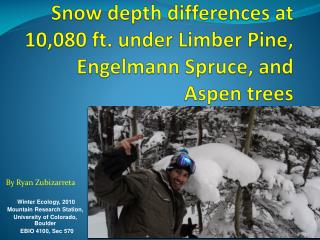 Snow depth differences at 10,080 ft. under Limber Pine, Engelmann Spruce, and Aspen trees