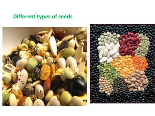 Different types of seeds