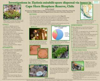 Investigations in  Tayloria  mirabilis  spore dispersal via insect in
