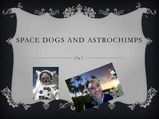 Space Dogs and  Astrochimps