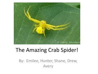 The Amazing Crab Spider!