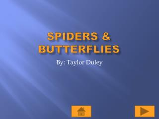 Spiders & Butterflies