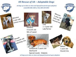 K9 Rescue of VA – Adoptable Dogs all dogs up to date on shots and Spayed/neutered upon adoption
