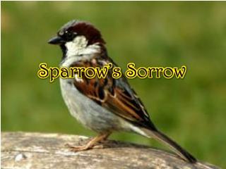 Sparrow's Sorrow