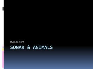 Sonar & Animals