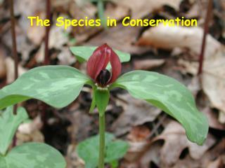 The Species in Conservation