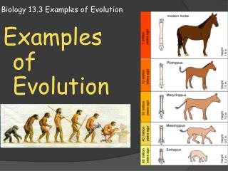 Biology 13.3 Examples of Evolution
