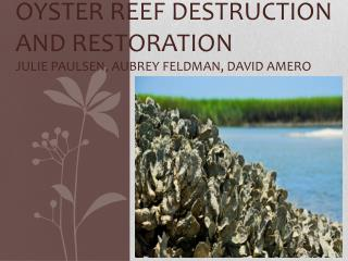 Oyster Reef Destruction  and Restoration Julie Paulsen, Aubrey Feldman, David  Amero