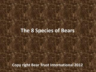 The 8 Species of Bears