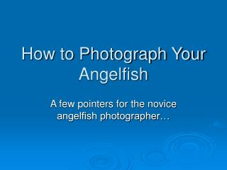 How to Photograph Your Angelfish