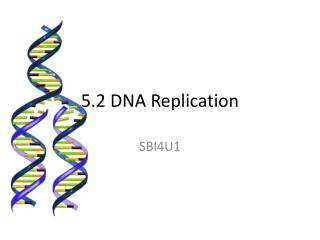 5.2 DNA Replication