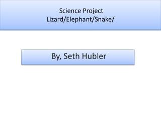 Science Project Lizard/Elephant/Snake/