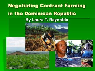 Negotiating Contract Farming   in the Dominican Republic