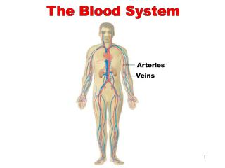 The Blood System